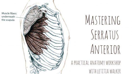 Serratus Anterior Workshop | Live Yoga Now