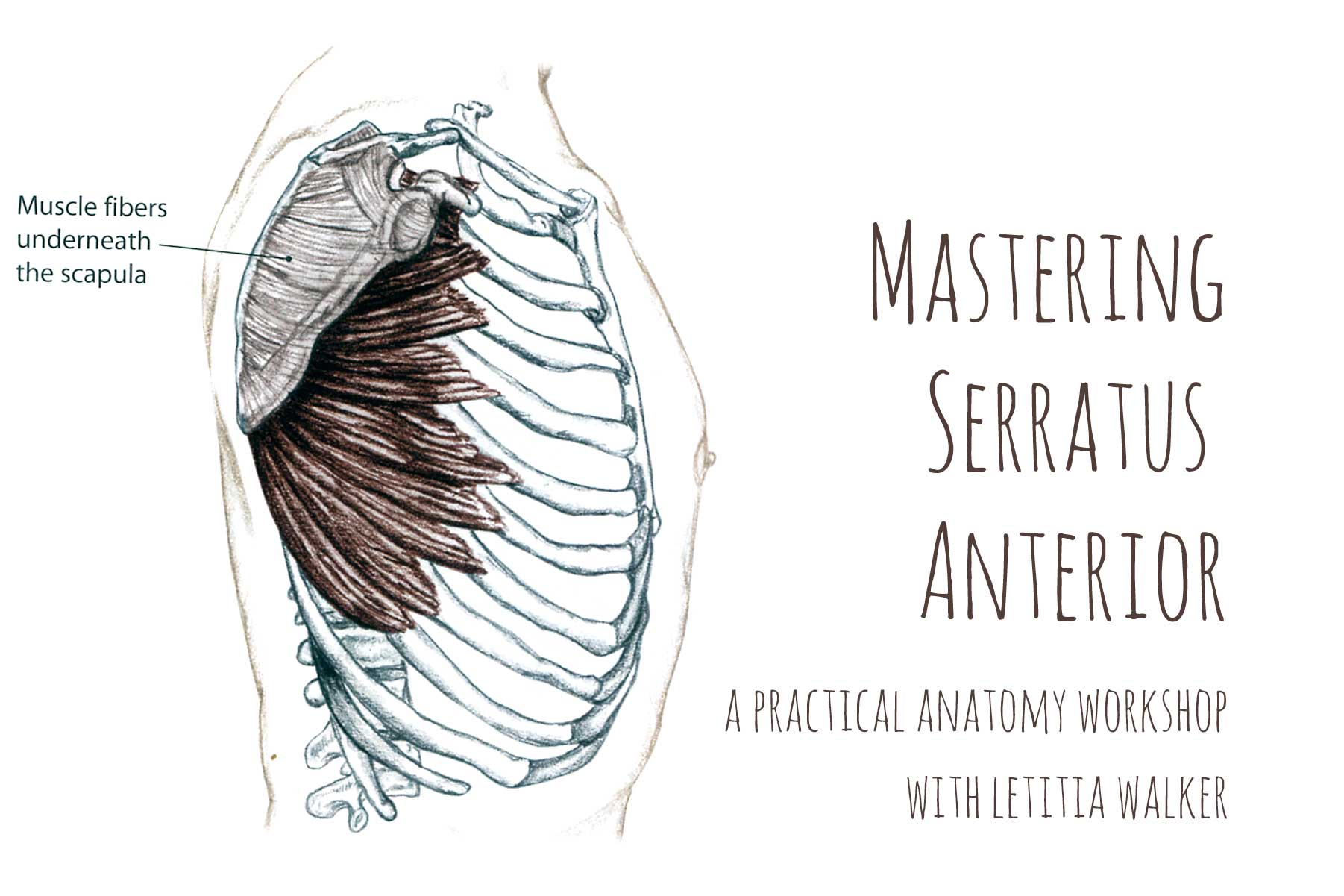 Serratus Anterior Workshop | Live Yoga Now